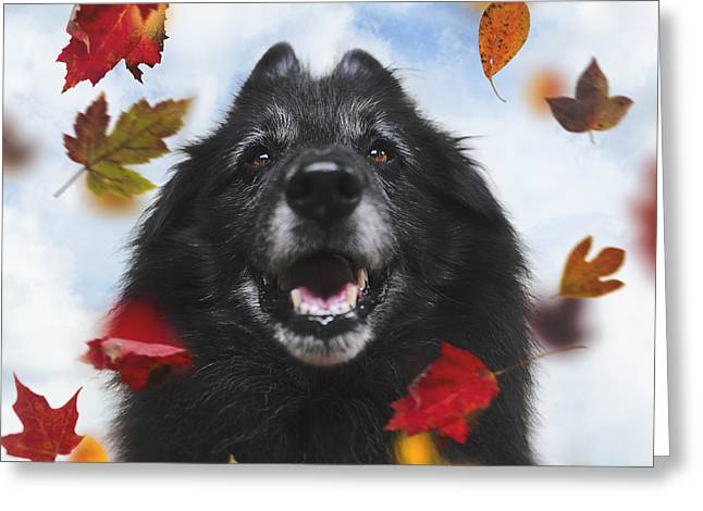 Sheepdog Greeting Cards - Belgian Shepherd with Autumn Leaves Greeting Card by Wolf Shadow  Photography
