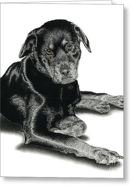 Chocolate Lab Greeting Cards - Bella Greeting Card by Chris Trudeau