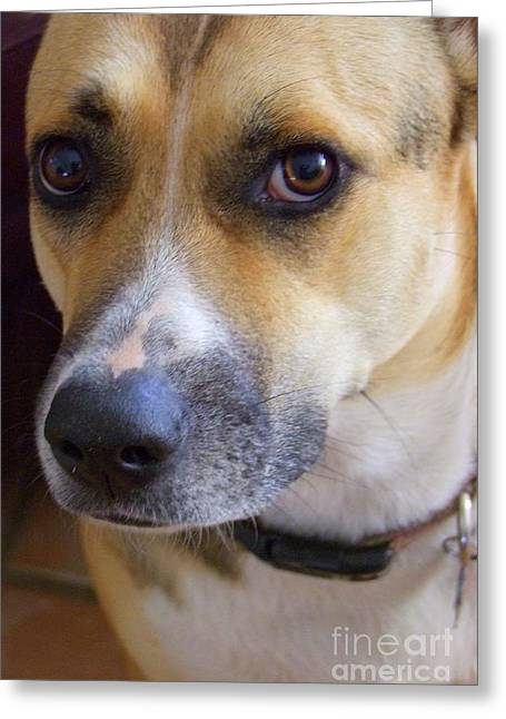 Kauai Dog Greeting Cards - Bella Greeting Card by Mary Deal