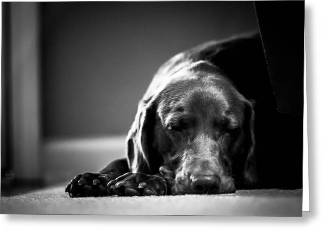 Chocolate Lab Greeting Cards - Bella Greeting Card by Mimi Erickson