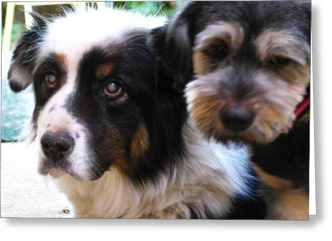 Best Friend Greeting Cards - Beloved Pets Greeting Card by Hazel Holland