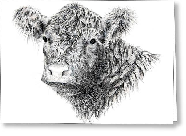 Moo Moo Greeting Cards - Beltie Greeting Card by Sandra Moore