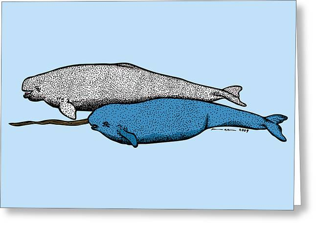 Whale Drawings Greeting Cards - Beluge and Narwhal Whale - Color Greeting Card by Karl Addison