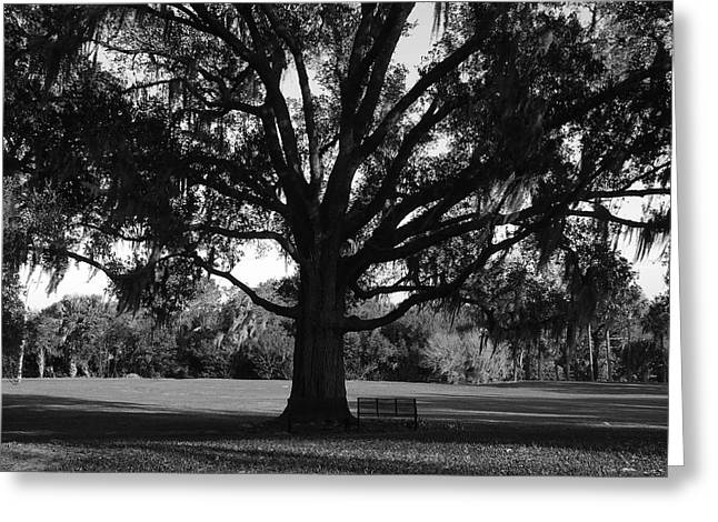 Park Benches Greeting Cards - Bench under Oak Greeting Card by David Lee Thompson