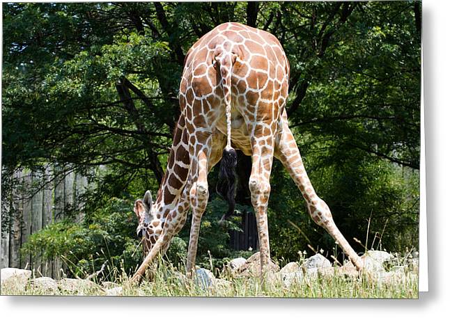 Bend And Stretch  Greeting Card by A New Focus Photography