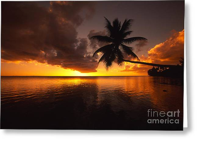 Bending Palm Greeting Card by Ron Dahlquist - Printscapes
