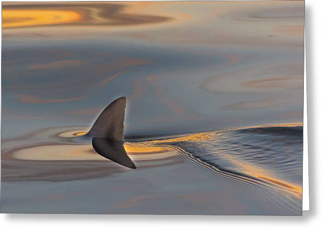 Aquatic Greeting Cards - Beneath The Tide Greeting Card by Bret Gardner