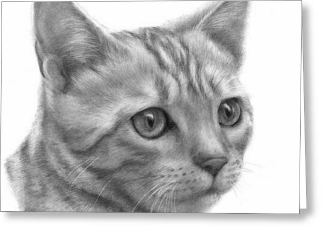 Bengal Drawings Greeting Cards - Bengal Cat Greeting Card by Jack Chambers