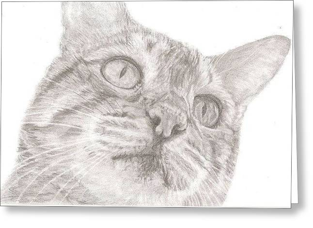 Bengal Drawings Greeting Cards - Bengal Cat Greeting Card by Rebecca Vose