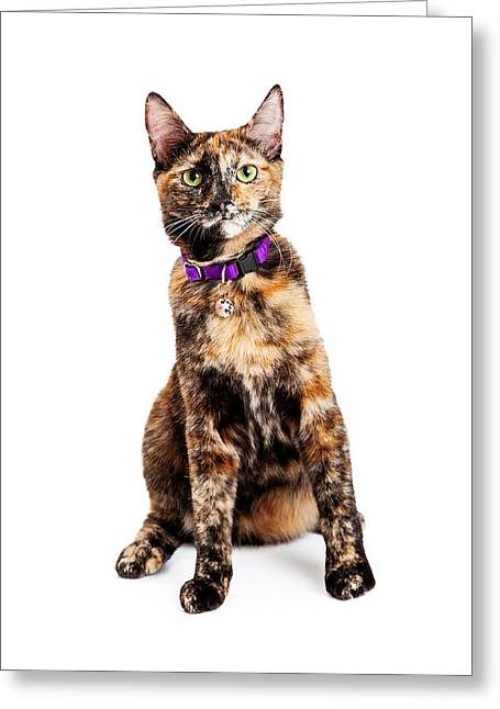 Brindle Greeting Cards - Bengal Kitty Cat Sitting Greeting Card by Susan  Schmitz