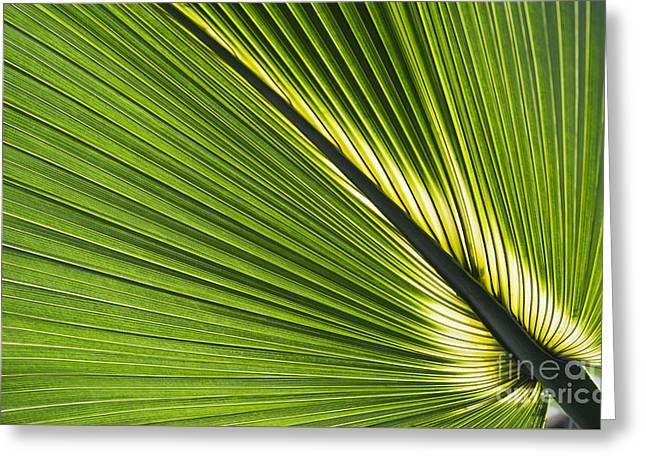 Bermudas Greeting Cards - Bermuda Palmetto Leaf Greeting Card by Tim Gainey