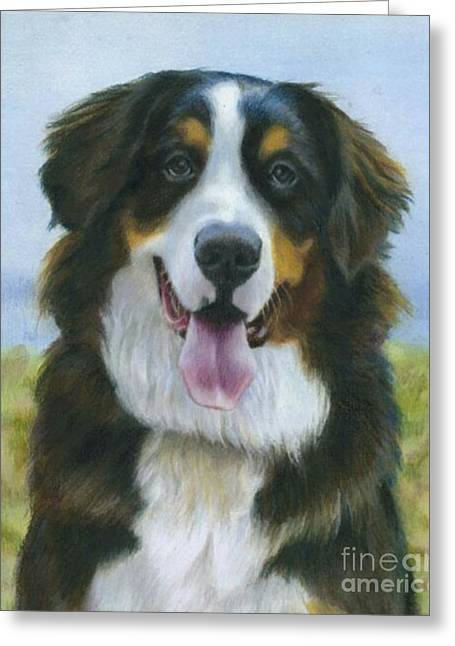 Working Dog Greeting Cards - Bernese Mountain Dog Greeting Card by Will Howard