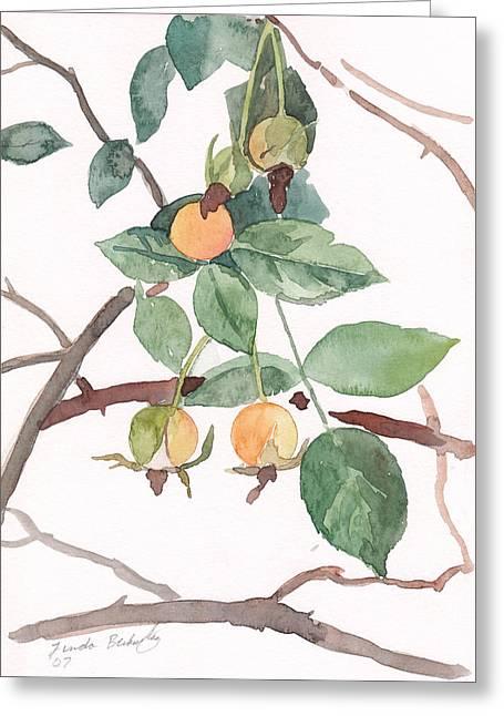 Berries In Pink Light Greeting Card by Linda Berkowitz