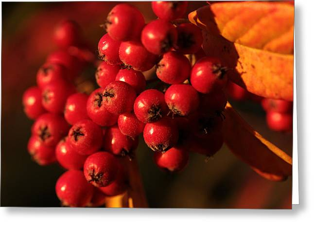Berry Bountiful Greeting Card by Connie Handscomb