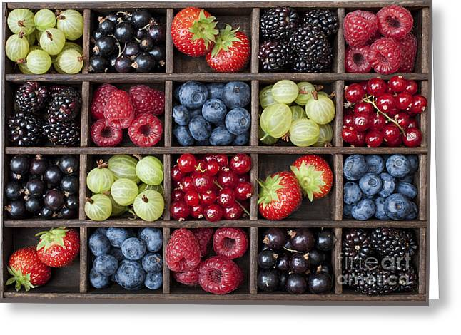 Berry Harvest Greeting Card by Tim Gainey