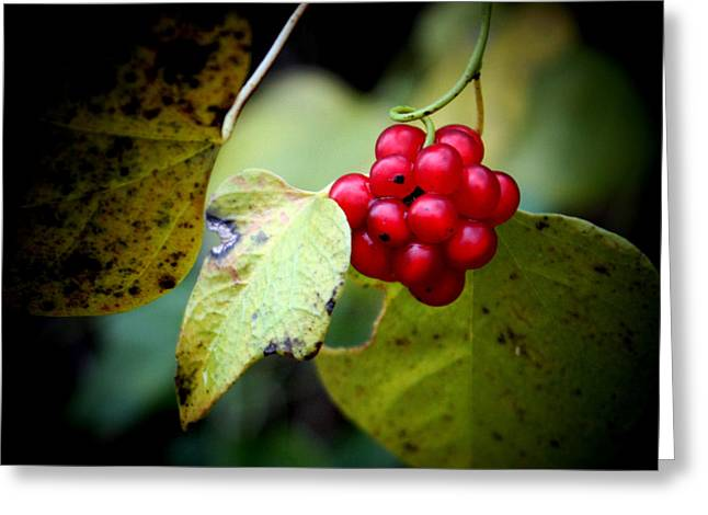 Black Berries Greeting Cards - Berry Nice Greeting Card by Karen M Scovill