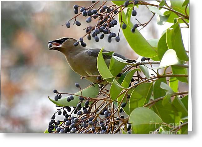 Bird Greeting Cards - Berry Toss Greeting Card by Liz Masoner
