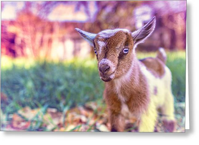 Goat Photographs Greeting Cards - Bert Greeting Card by TC Morgan