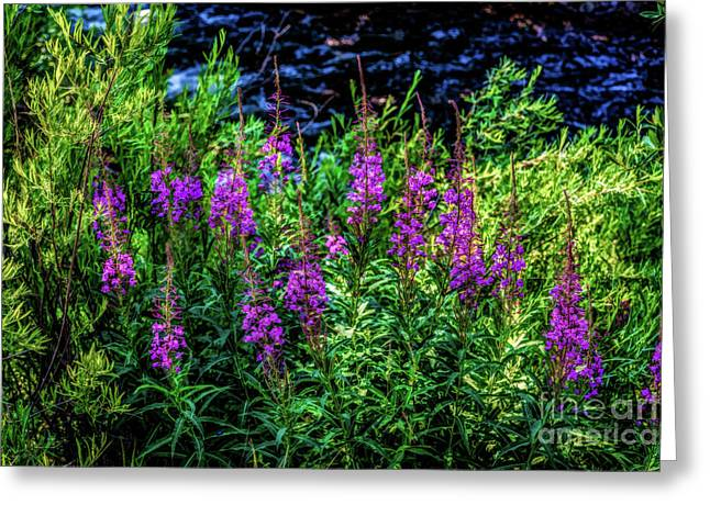 Mountain Valley Greeting Cards - Beside Gore Creek Greeting Card by Jon Burch Photography