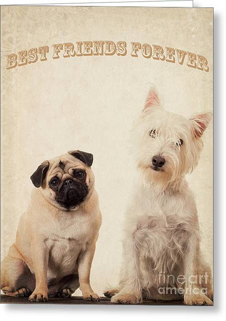 Dogs. Pugs Greeting Cards - Best Friends Forever Greeting Card by Edward Fielding