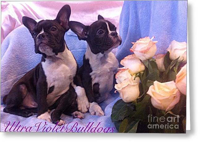 Puppies Paintings Greeting Cards - Best friends forever  Greeting Card by Ultra Violet