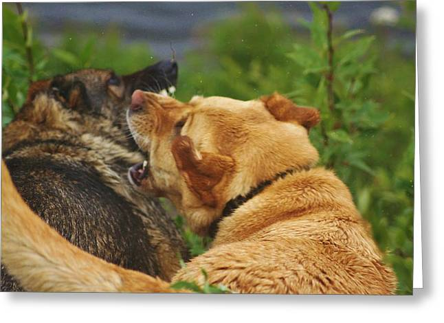 Growling Greeting Cards - Best Friends Greeting Card by Lori Mahaffey