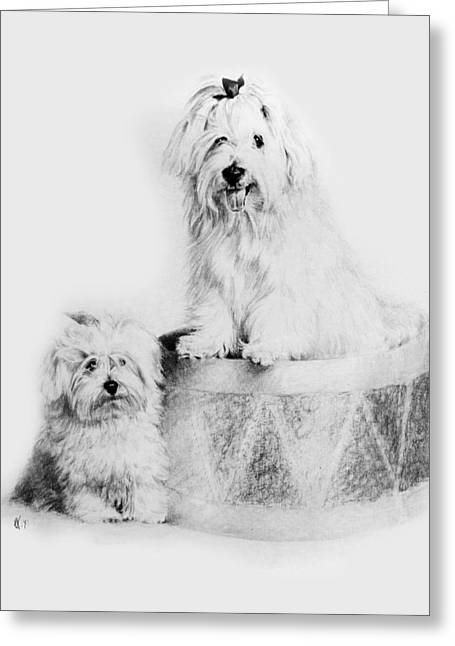 Toy Dogs Drawings Greeting Cards - Best Friends Greeting Card by Rachel Christine Nowicki