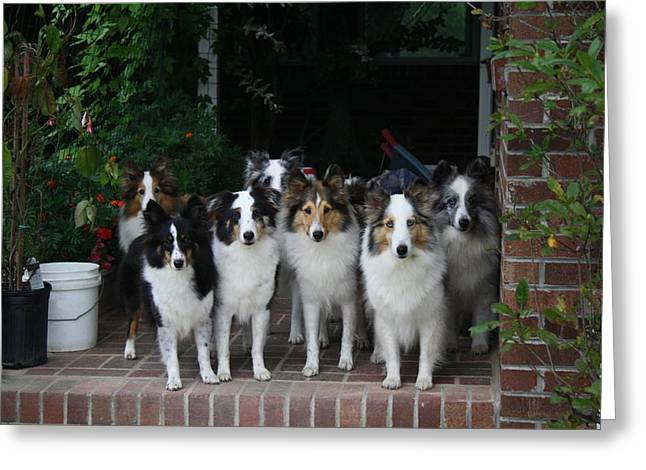 House Pet Greeting Cards - Better Get Those Dogs in the House Greeting Card by Kathryn Meyer