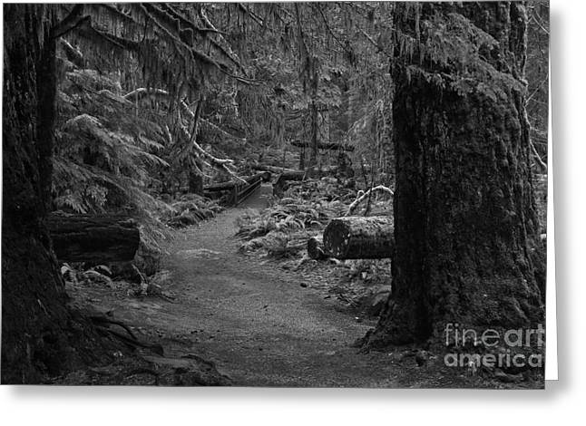 Betwen Two Giants - Black And White Greeting Card by Adam Jewell