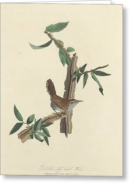 Bewick's Long-tailed Wren Greeting Card by John James Audubon