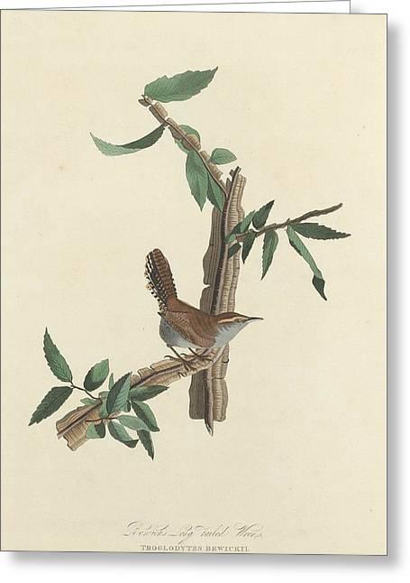 Bewick Greeting Cards - Bewicks Long-Tailed Wren Greeting Card by John James Audubon