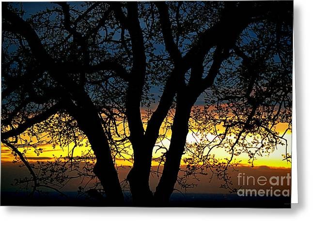 Beyond The Oak Tree Greeting Card by Cheryl Young