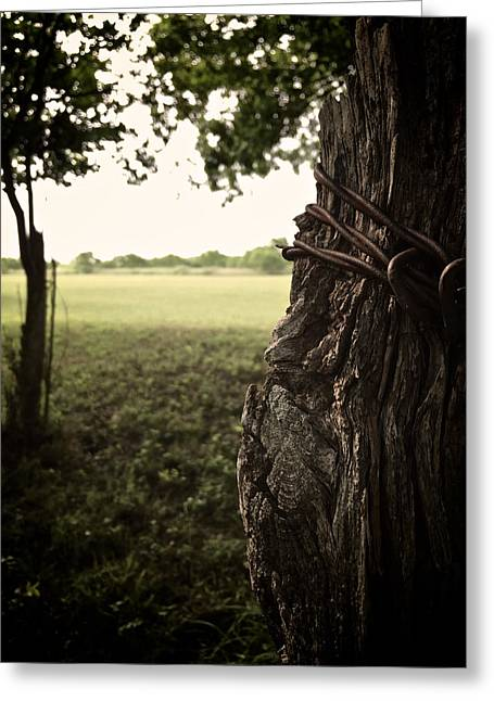 Aperture Greeting Cards - Beyond the Post Greeting Card by Kendall Muyres