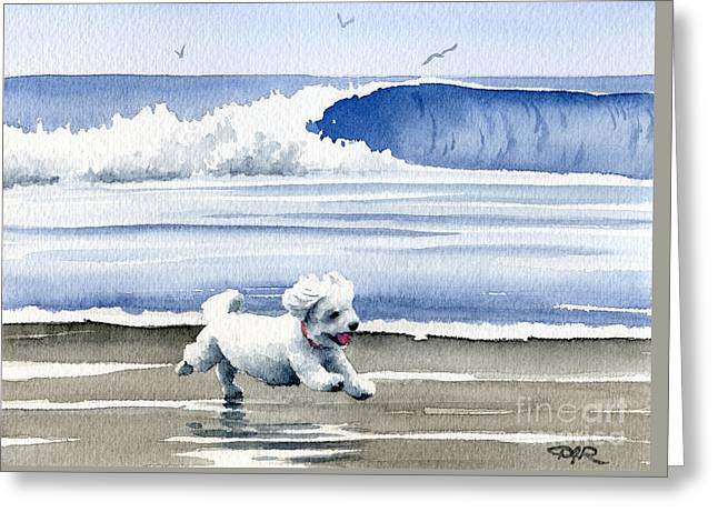 Toy Dog Greeting Cards - Bichon Frise At The Beach Greeting Card by David Rogers