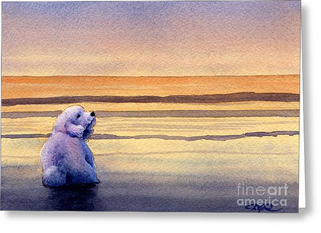 Toy Dog Greeting Cards - Bichon Frise Sunset Greeting Card by David Rogers