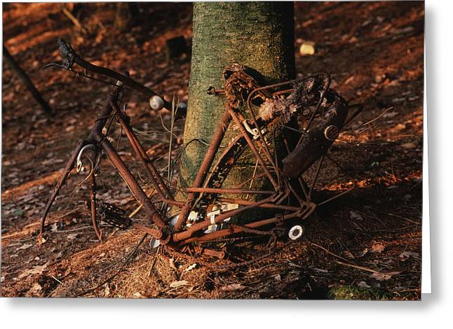 Refuse Greeting Cards - Bicycle abandoned in a forest Greeting Card by Bernard Jaubert