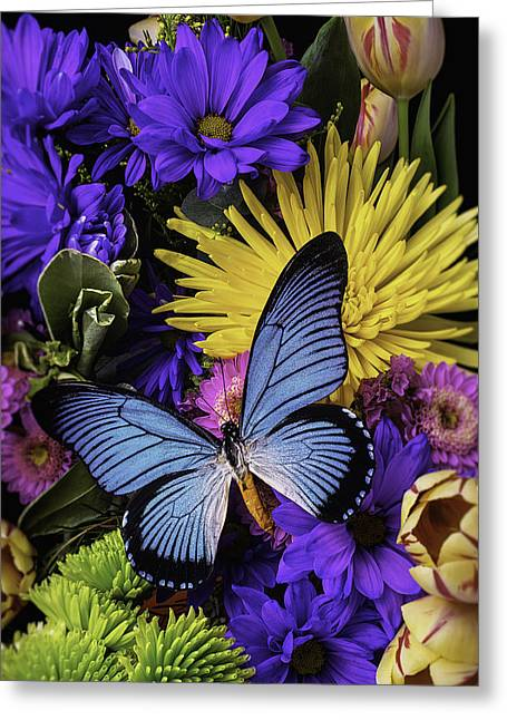 Daisy Greeting Cards - Big Blue Wings Greeting Card by Garry Gay