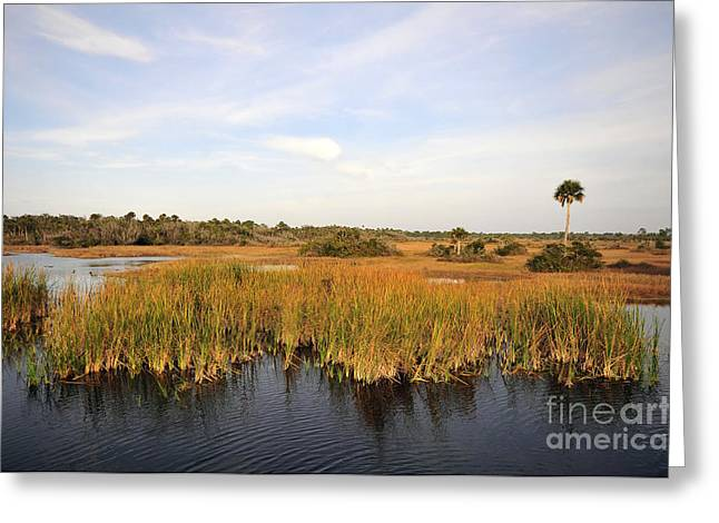Saw Greeting Cards - Big Cypress Landscape number six Greeting Card by David Lee Thompson