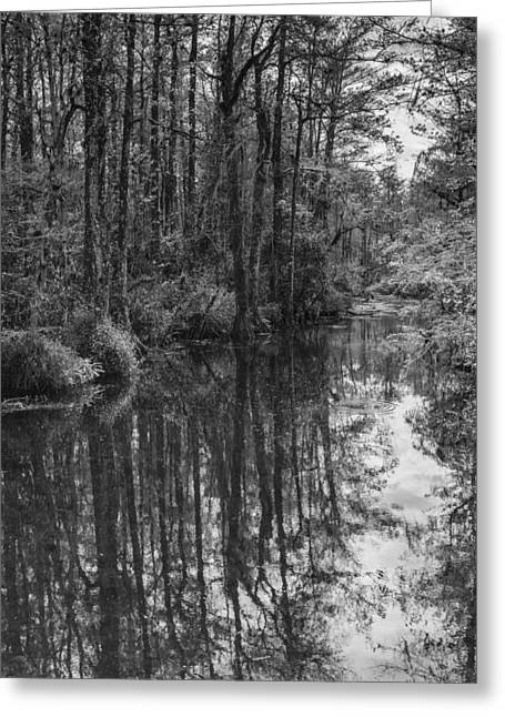 Everglades Greeting Cards - Big Cypress Stillness Greeting Card by Jon Glaser