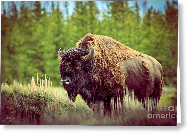 Big Daddy Greeting Card by Robert Bales