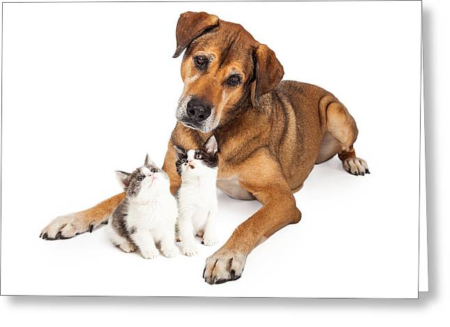 Big Dog Looking Down At Kittens Greeting Card by Susan  Schmitz