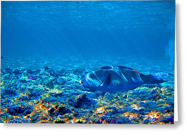 Mccoy Greeting Cards - Big fish. Underwater World. Greeting Card by Andy Za