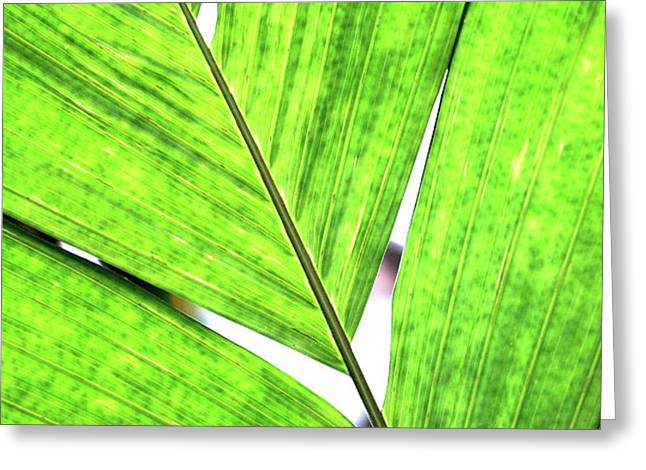 Big Green Leaf . 7D5763 Greeting Card by Wingsdomain Art and Photography