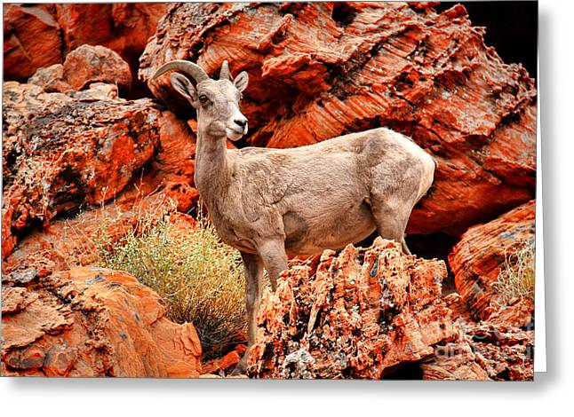 Mountain Valley Greeting Cards - Big Horn Sheep Greeting Card by Mariola Bitner
