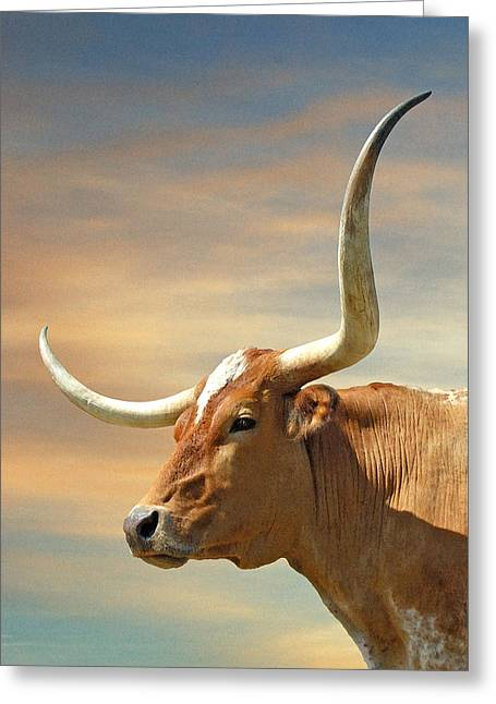 Texas Longhorn Cow Greeting Cards - Big Horns Greeting Card by Robert Anschutz
