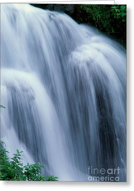 Hamakua Greeting Cards - Big Island Waterfall Greeting Card by William Waterfall - Printscapes