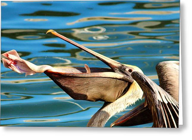 Seabirds Greeting Cards - Big Mouth Pelican Greeting Card by Cynthia Guinn