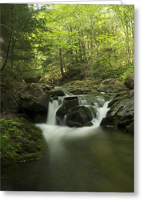 Yellow Dog Greeting Cards - Big Pup Falls 1 Greeting Card by Michael Peychich