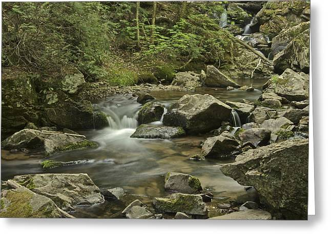 Yellow Dog Greeting Cards - Big Pup Falls 2 Greeting Card by Michael Peychich