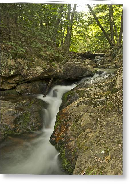 Yellow Dog Greeting Cards - Big Pup Falls 4 Greeting Card by Michael Peychich